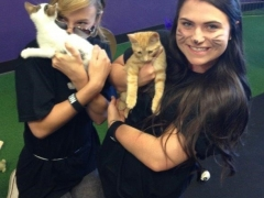 Kitties and Employees
